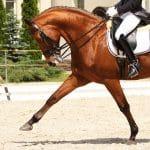 dressage-rider